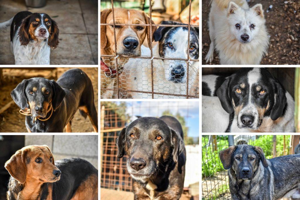 Animal Rescue Kefalonia Collage 3 v2