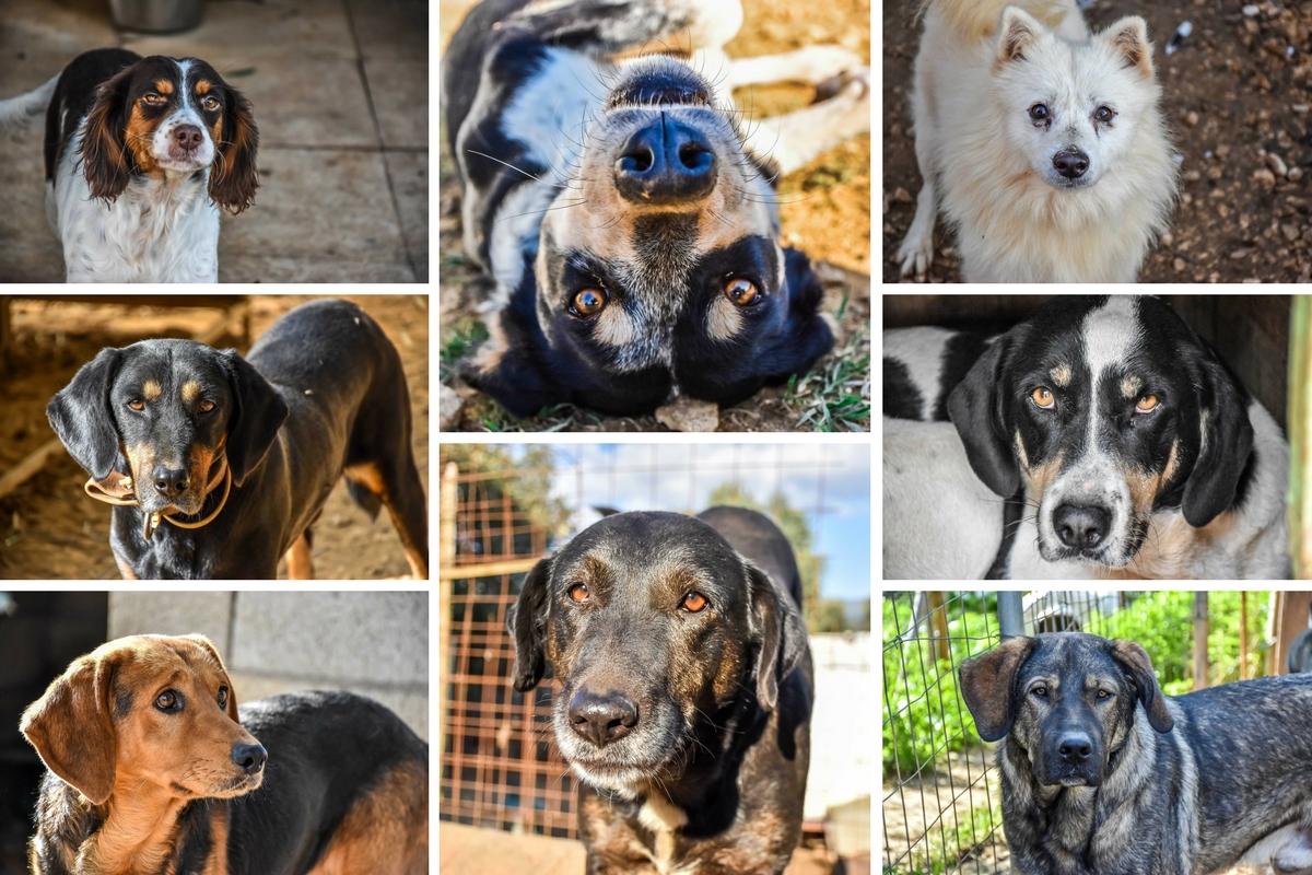 Animal Rescue Kefalonia Collage 3