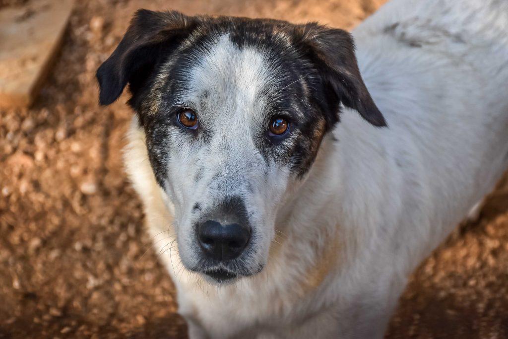 Dogs For Adoption - Rosielea Animal Rescue Kefalonia (ARK)