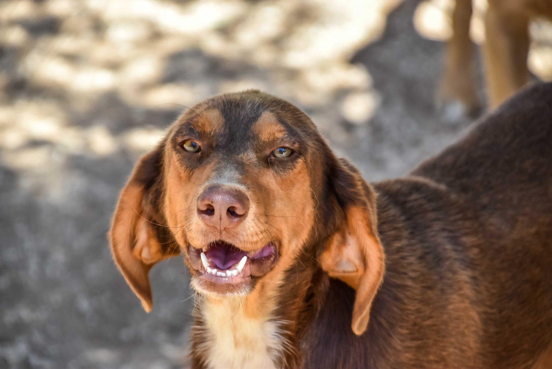 Animal Rescue Kefalonia - ARK