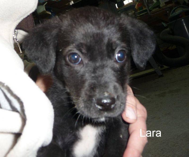 Lara at just a few weeks old