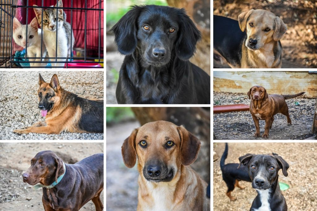 Animal Rescue Kefalonia Collage 2