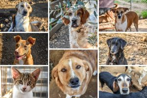 Animal Rescue Kefalonia Collage 4