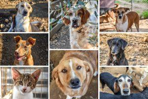 Animal Rescue Kefalonia Collage 4
