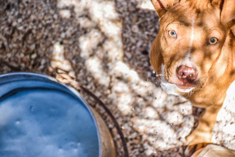 Become a Member - Animal Rescue Kefalonia