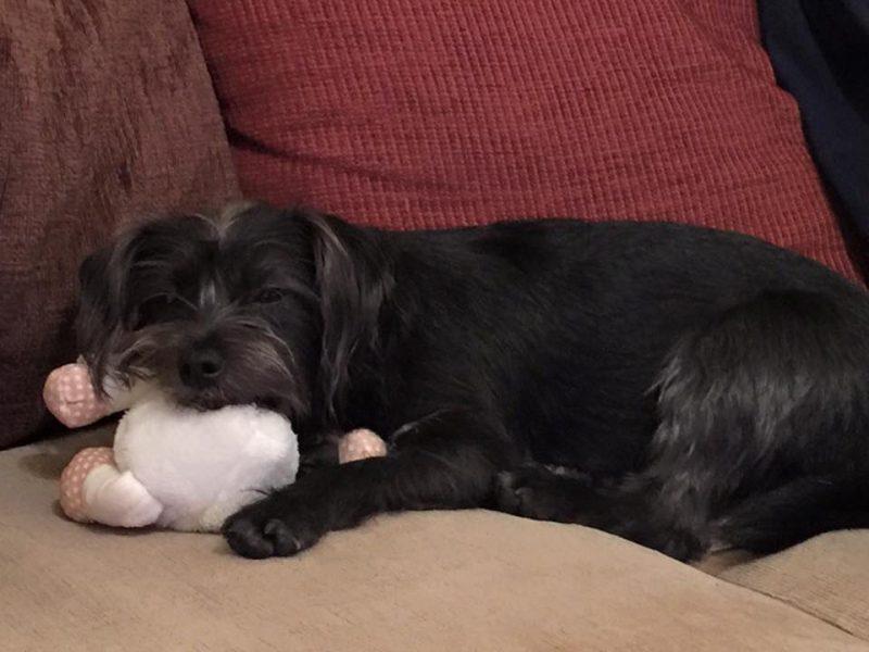 Kiki soon made herself at home!