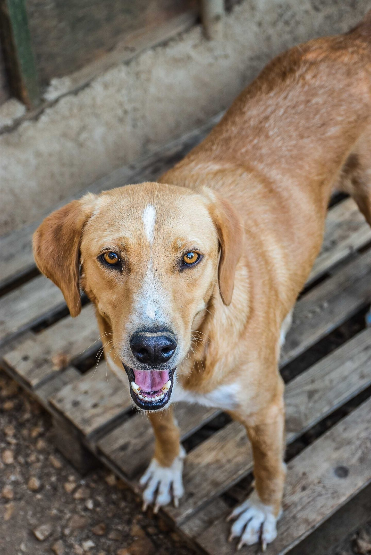 Adopt from Animal Rescue Kefalonia