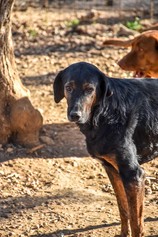 Donate to Animal Rescue Kefalonia