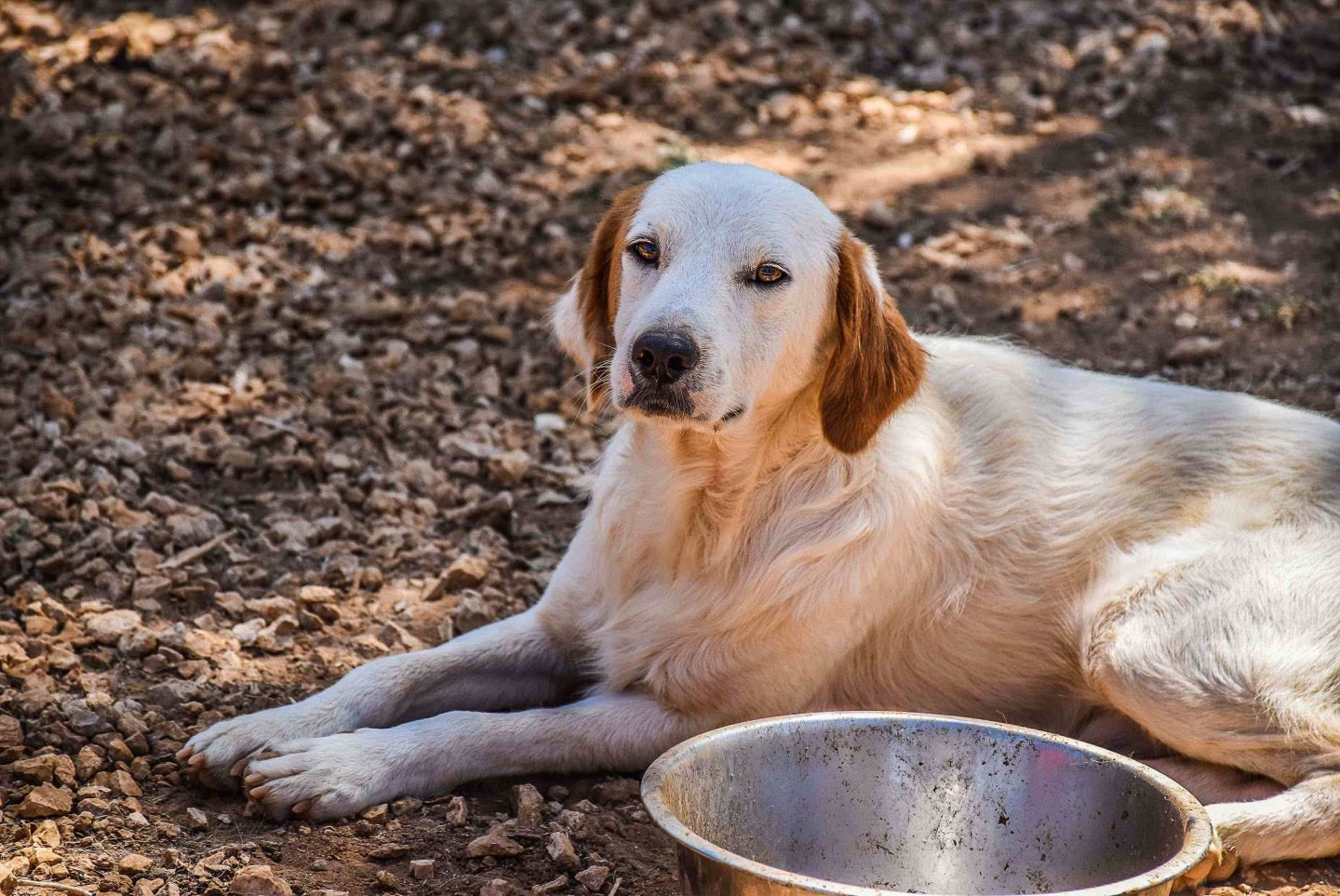 Animal Rescue Kefalonia Monthly Food Club - Feed Them All