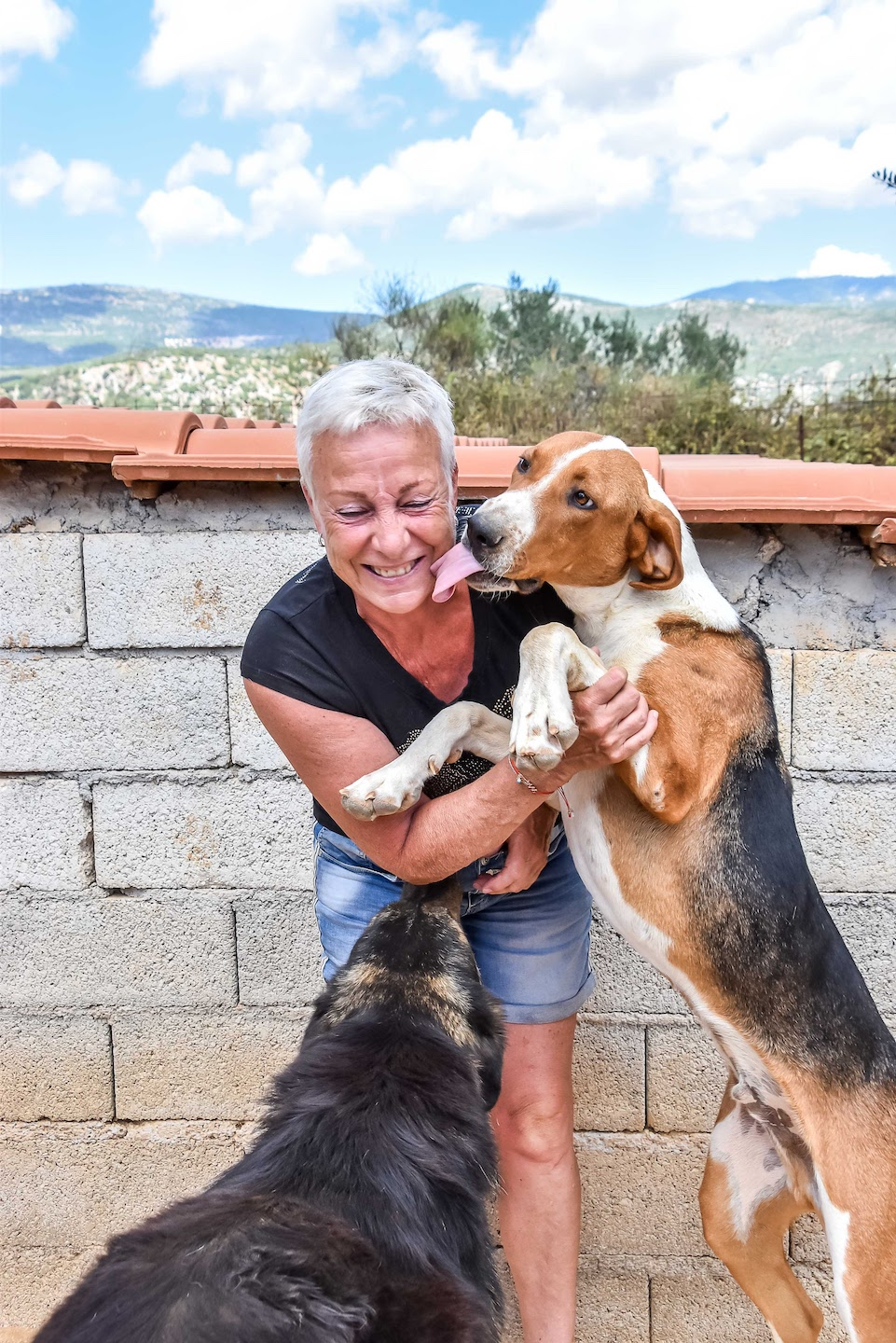 Cuddles from the dogs at Animal Rescue Kefalonia