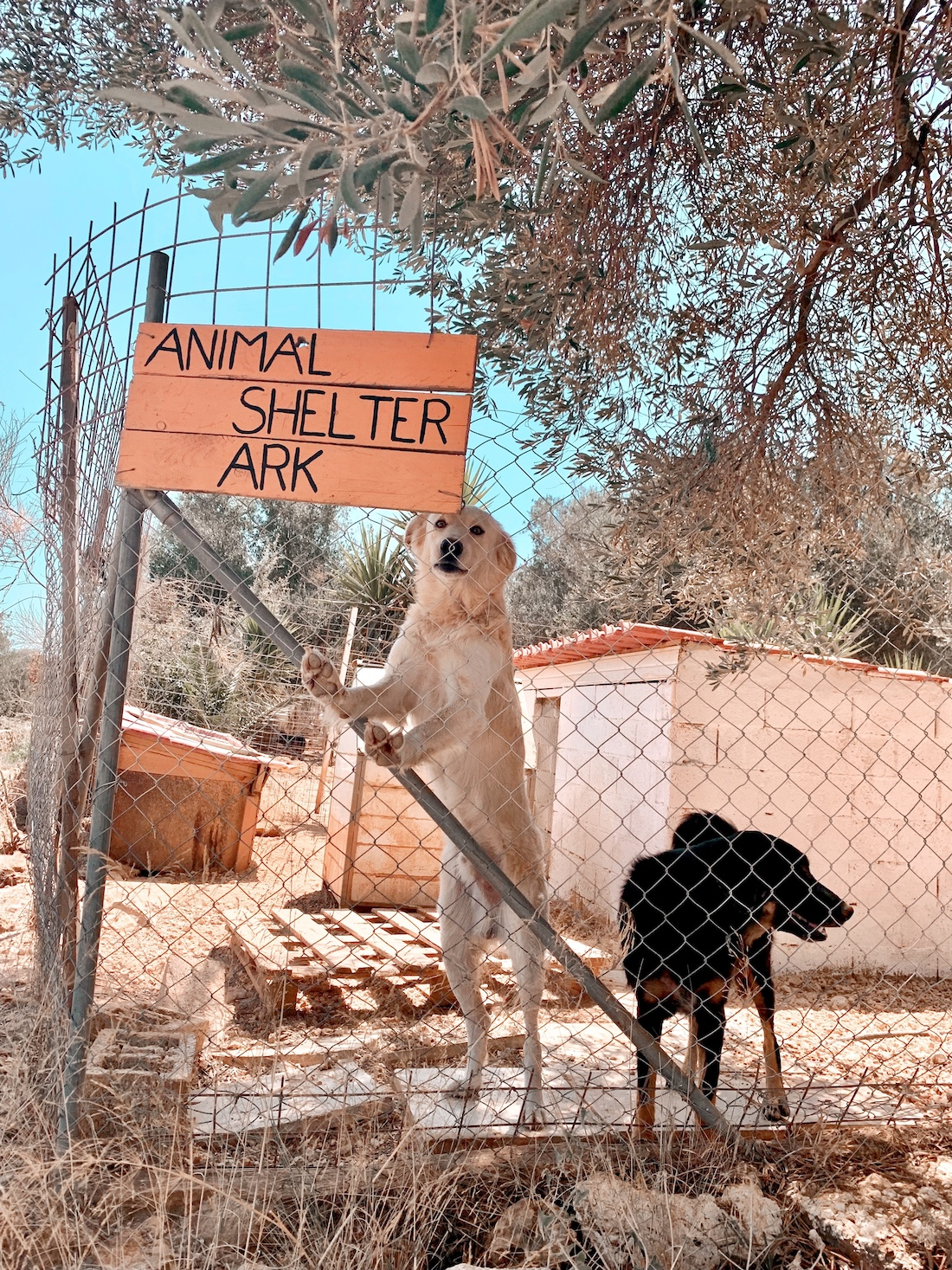 How to to Get to Animal Rescue Kefalonia