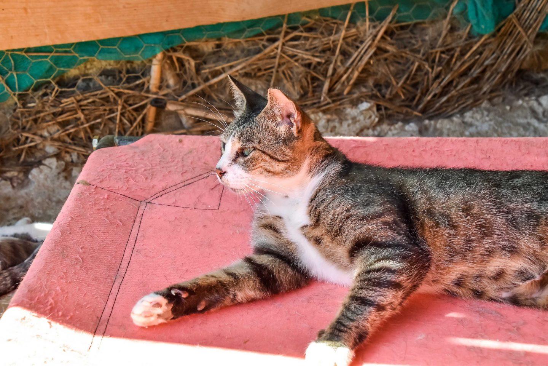 Cat relaxing at Animal Rescue Kefalonia (ARK)