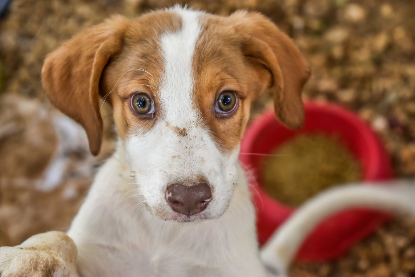 Donate Monthly to Animal Rescue Kefalonia