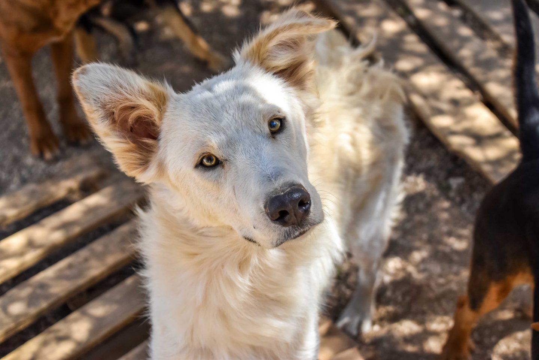 Donate to Animal Rescue Kefalonia - Apollon